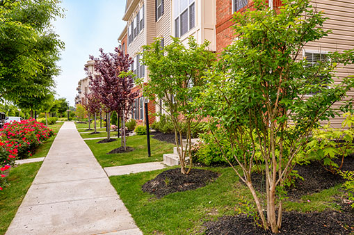 exterior sidewalk, trees, grass, flowers and building at Dartmoor Place at Oxford Square apartments in Hanover, MD